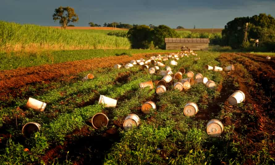 Buckets ready for the itinerant fruit pickers near Bundaberg, Queensland.