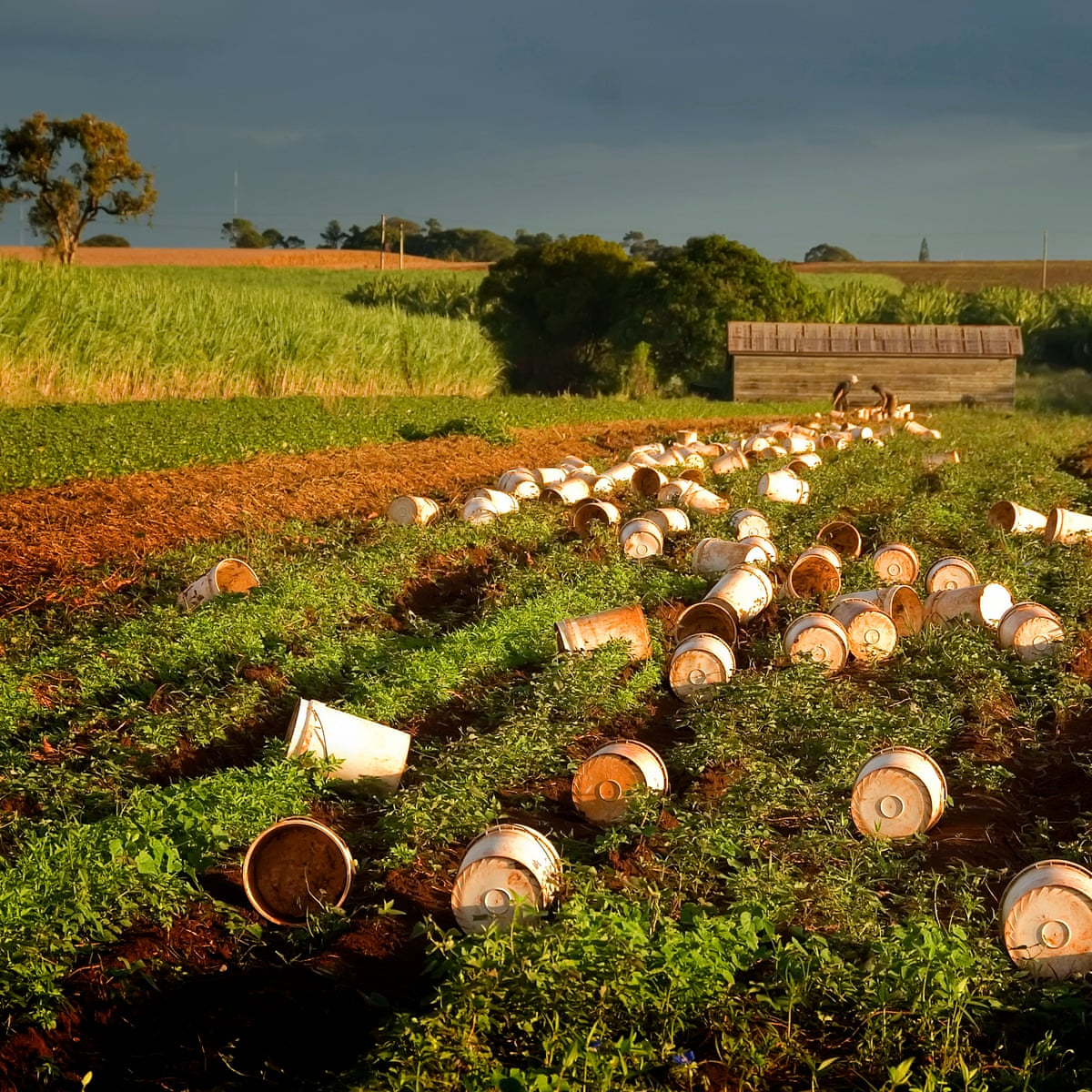 Hungry Poor Exploited Alarm Over Australia S Import Of Farm Workers Australia News The Guardian