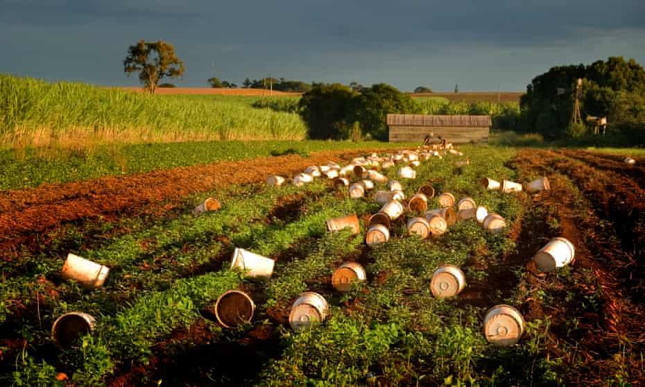 Buckets ready for the itinerant fruit pickers near Bundaberg,