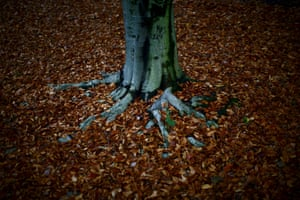 Fallen leaves at the base of a tree at Rock Creek park in Washington