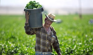 'People don't want to pay more than $1 for a head of lettuce. So we're paying poverty wages. It's a broken system,' said one longtime Californian farmer.