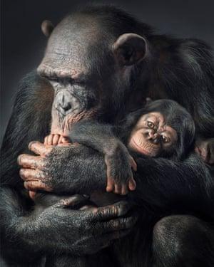 Animal magic: chimpanzee Ruma and her baby.