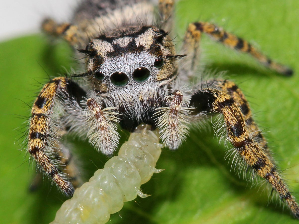 World's spiders devour 400-800m metric tons of insects yearly – experts    Insects   The Guardian