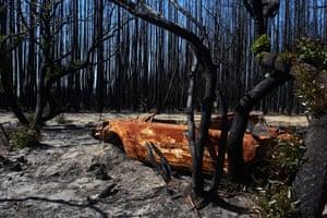 Kangaroo Island, six weeks after the fires.