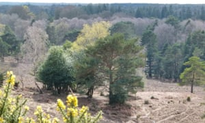 April view from Acres Down, New Forest