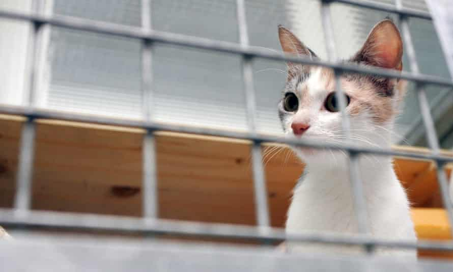 A cat looks out of her cage at an animal shelter