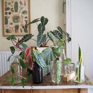 Home propagation by academic Laura Jenkins @_houseplanthouse.
