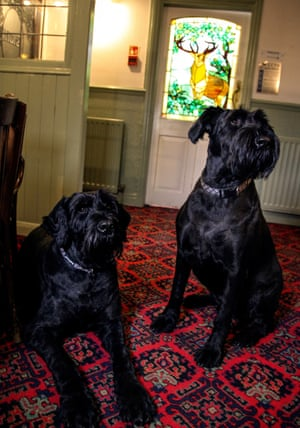 Tilly and River at the Buck Inn