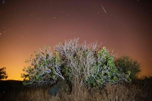 A Perseid meteor streaks across the sky above trees in Luzit, Israel