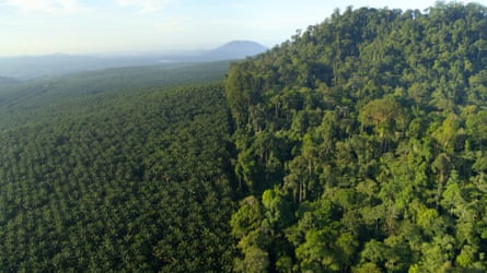 Intensive agriculture, such as this palm oil plantation in Borneo, has lead to a loss of biodiversity.