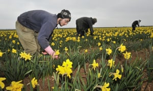 Migrant agricultural workers in Lincolnshire