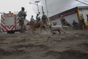 Batangas, Philippines Security personnel and stray dogs negotiate thick volcanic ash in the town of Agoncillo in Batangas following the Taal volcano eruption
