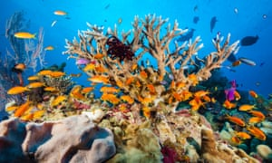 The Coral Sea is an area of particular concern under new management plans where conservationists say unique coral habitats have not been given adequate levels of protection.