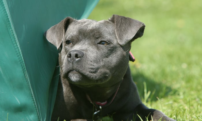 Britain's most popular dogs? I have a bone to pick with the