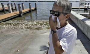 Alex Kuizon covers his face as he stands near dead fish at a boat ramp in Bradenton Beach.