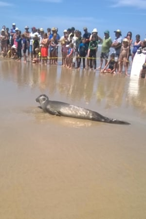 Spectators keep their distance from the seal