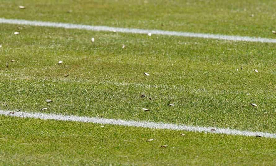 Flying ants at Wimbledon.