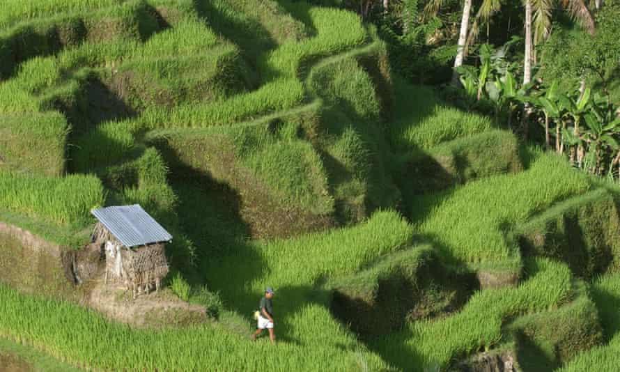 Tegalalang in Bali