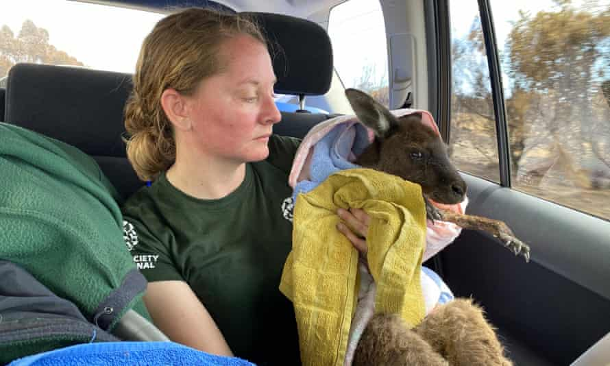 Kelly Donithan with a rescued wallaby