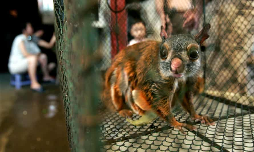 A flying squirrel inside a cage for sale at a market in China's southern city of Guangzhou, 16 September 2004.