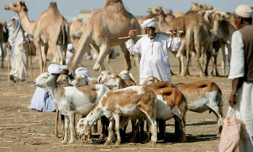 A Sudanese vendor stands next to his sheep at an animal market on the road between Qadarif and Kassala states in Al-Shuwak in eastern Sudan on 16 February 2010.