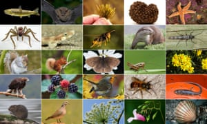 The 25 sequenced species
