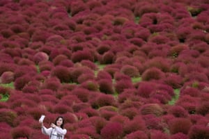 Hitachinaka, Japan: A woman takes a selfie in a kochia field in Hitachi Seaside Park. More than 30,000 Kochia balls planted each June in the 350-hectare field transform from emerald green to ruby red in the autumn
