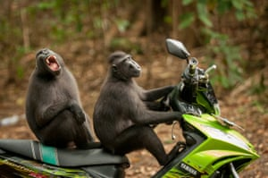 Monkey escapeKaty Laveck-Foster wins highly commended for her monkeys enjoying a moped ride in North Sulawesi, Indonesia