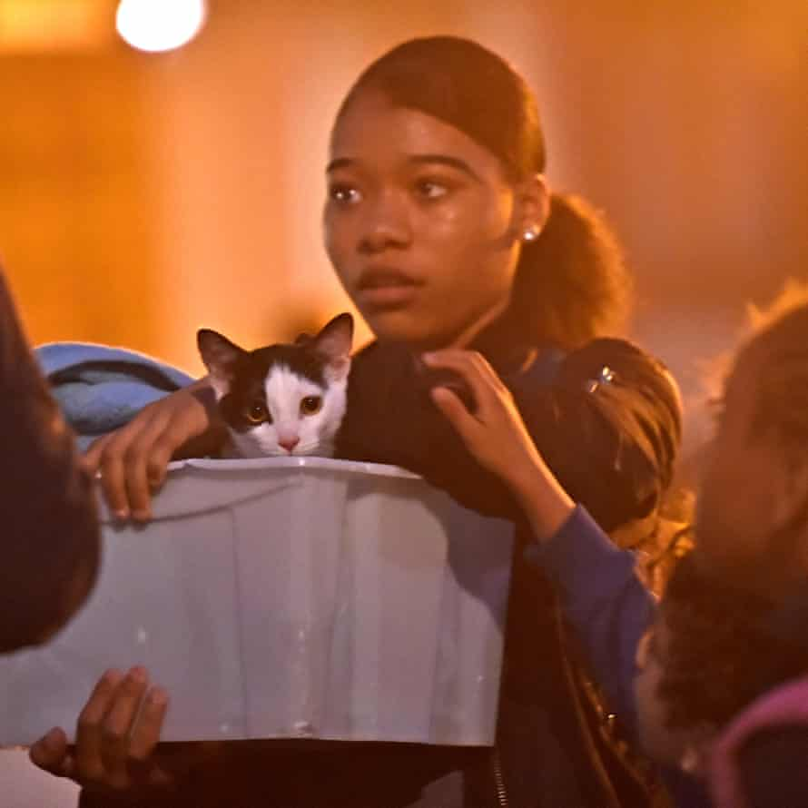 A resident and a cat are evacuated from the Taplow Tower residential block. The move is a precautionary measure after concerns over the type of cladding used on the building on the Chalcots estate in north London