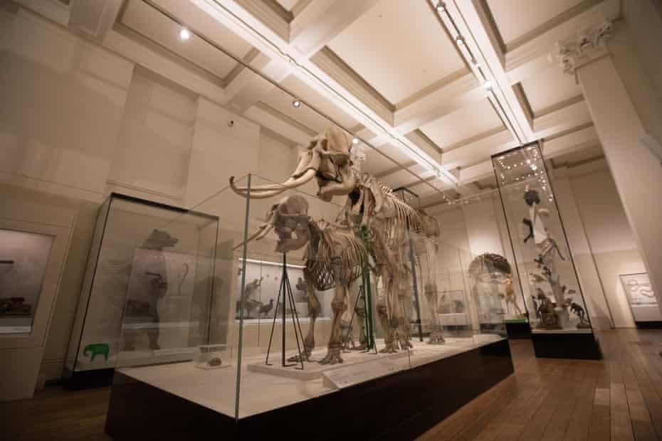 Animal skeletons on display at the Australian Museum.