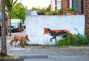 Highly commended: Fox Meets Fox by Matthew Maran, UK