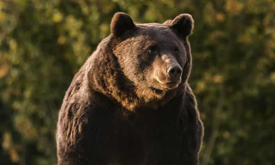 Arthur, the bear