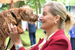 Norwich, UK. The Countess of Wessex receives a wet welcome from Gilpin the Norfolk terrier at a county show