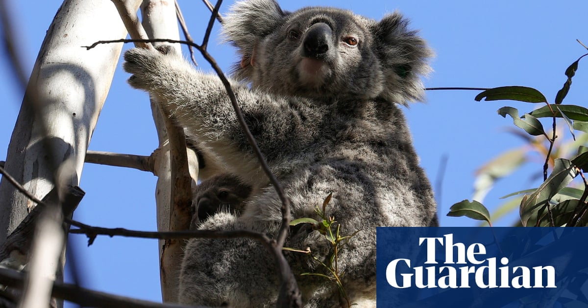 Zero extinction target for NSW national parks welcomed by environment groups