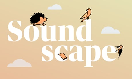 Soundscape: relax to the sounds of British wildlife