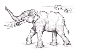 Herds of Stegotetrabelodon syrticus wandered the Arabian peninsula seven million years ago. They were roughly the same size as modern elephants but had four huge tusks.