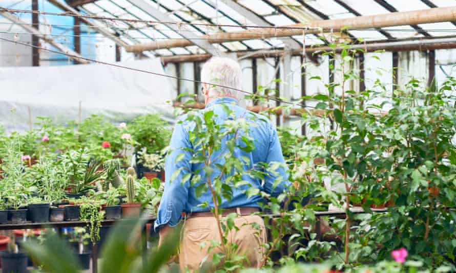 Rear view of senior man working with plants in hothouse