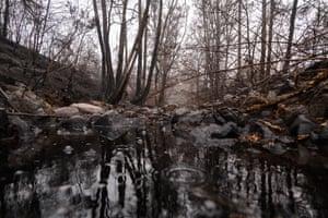 Rain falling into a creek in burnt-out bushland near Cobargo