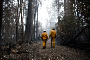 Members of the Tasmanian Fire Service walk through what was once a green canopy of ferns and trees