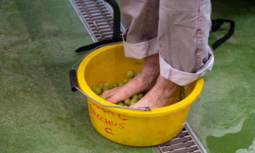 A Dartington Trust guest treading grapes in a yellow bowl