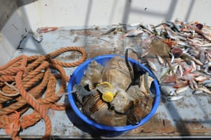 Plastic bottles will soon be appearing alongside cod and haddock on chip shop menus, it is hoped. About 10% of the volume of each fish haul caught is plastic waste.