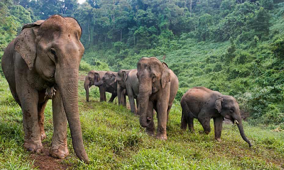 Elephant Conservation Center, Laos