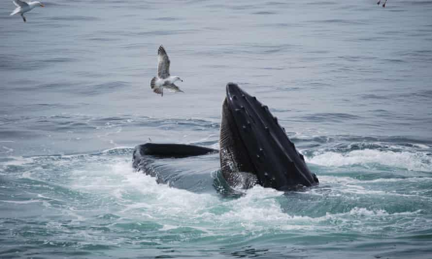 Marine scientists says whales are generally not interested in bothering humans, but it's wise to steer clear.