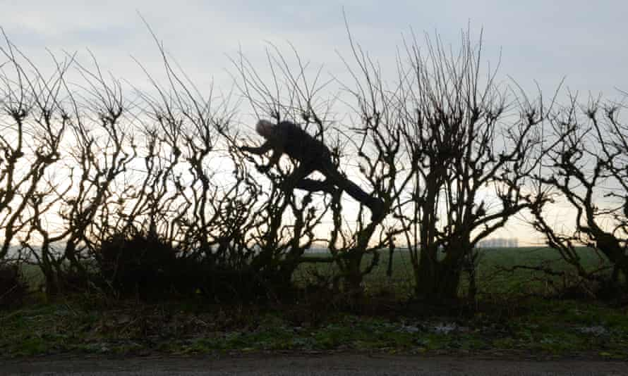 Hedge walk. Dawn. Frost. Cold hands. Sinderby, England