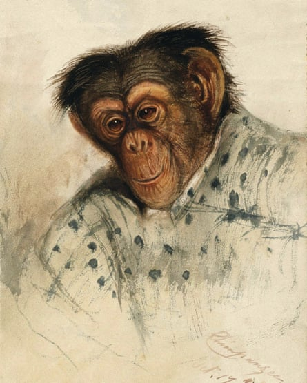 Chimpanzee head by Edward Lear.