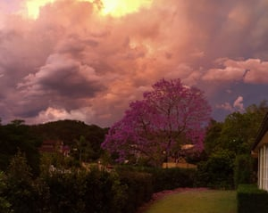 A  jacaranda against a backdrop of storm clouds at The Gap in Brisbane