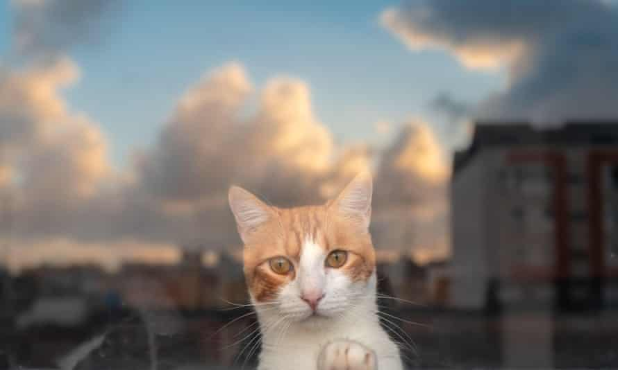 A brown and white cat through a the window