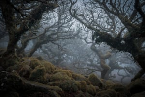 Wistman's Wood, Dartmoor national park, by Debra Smitham: 'The mystical, ancient Wistman's Wood.'