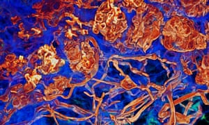A laser scan of fungi living within plant roots, with the fungus rendered in red, and the plant in blue.