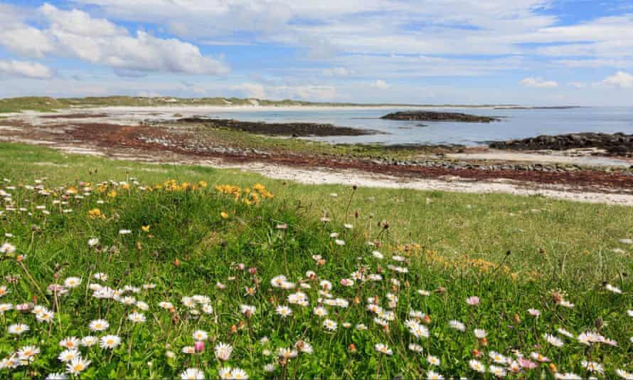 Wildflowers growing near Traigh Iar beach Balranald, North Uist, Scotland.